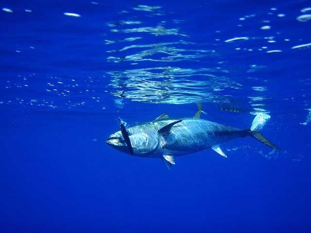 apa cu ton albastru in ea