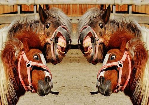 cai dilai cu gura pana la urechi