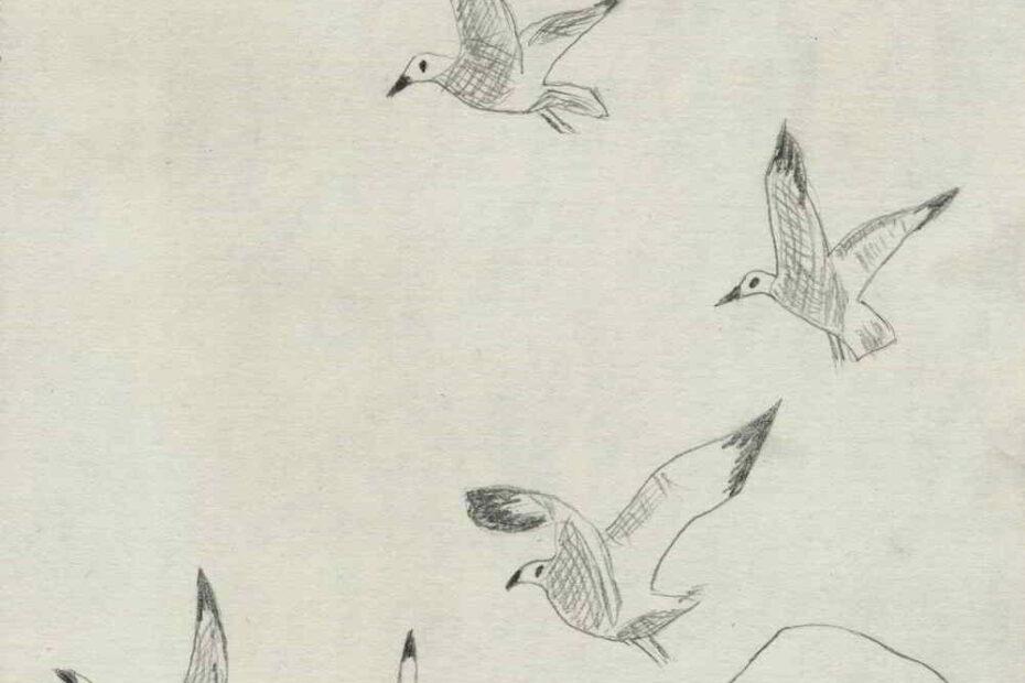 pescarusi, desen in creion