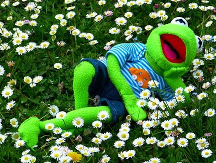parodie kermit the frog