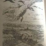 ilustratie nils holgerlson carte selma lagerloff
