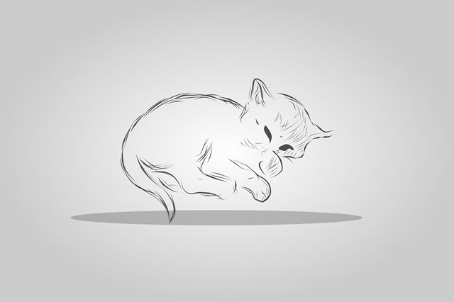 pisica draguta pentru propietar de pisici